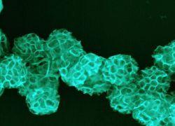 Медицинские наночастицы опасны для здоровья