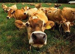 Украина боится белорусского молока?