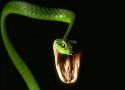 Чемпионат мира по футболу в опасности из-за змей
