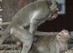 Ученые объяснили загадку секса в животном мире