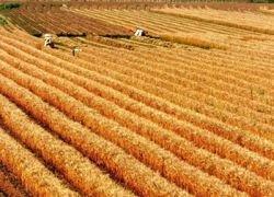 Сельское хозяйство РФ развивается только по телевизору