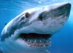 В замороженных акулах на Юкатане нашли тонну кокаина