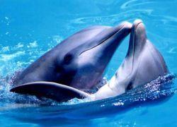 Дельфины делают людей умнее