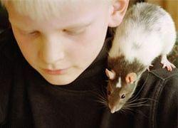 Крысы умеют играть в азартные игры