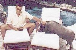Джордж Клуни ищет контакта с духом покойной свиньи