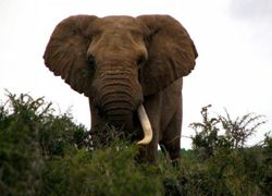 Слон – единица экономическая