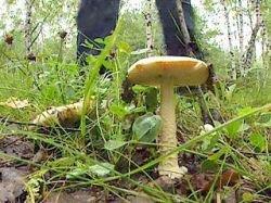 Микологи обнаружили на Алтае уникальные грибы