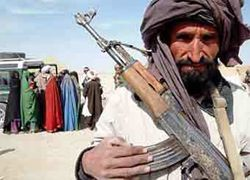 """Ученые нашли сходство у \""""Талибана\"""" и фермы"""