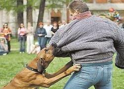 Штрафы для хозяев кусачих собак вырастут в пять раз