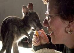 Австралийская фауна вымерла из-за человека