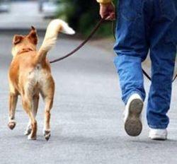 Москвичей научат правильно выгуливать собак