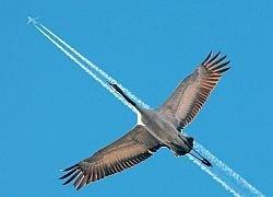 Птицы заставили США изменить конструкцию самолетов