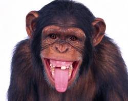 Чувство справедливости у людей и обезьян