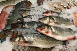 Рыбу вылечат с хвоста