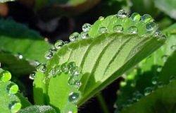 Растительное электричество: Ток из листьев