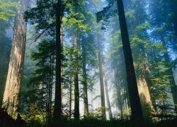Кризис поможет сохранить лес