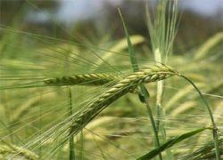 Засуха - не главная беда российских крестьян