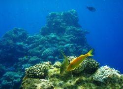 Полезные ископаемые под водой будут искать роботы