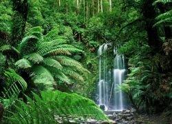 Тропический лес уступает место пустыне