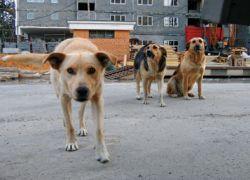 Бездомные собаки искусали депутата парламента Белграда