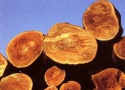 Создана технология для сохранения леса