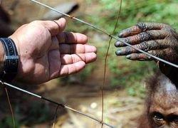 Ученые нашли отличия человека от обезьяны