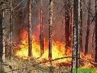 США: В лесных пожарах виновны люди