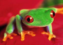 В Индии обнаружены лягушки, вьющие гнезда