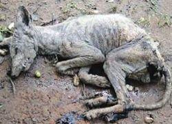 В Техасе обнаружили труп мифического животного-вампира