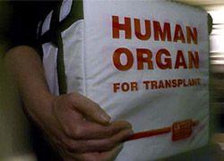 Торговцев человеческими органами арестовали в Египте