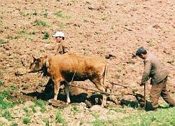 Земледелие и скотоводство в Европу принесли мигранты