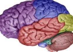 Повреждения мозга устранит гидрогель