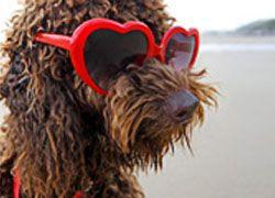 Первый пляж для собак появился в Риме