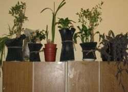 Растения в офисах снимают стресс и повышают внимание