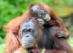 Ученые раскрыли закон джунглей