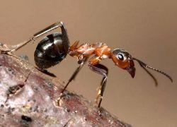 Муравьи помогут обнаружить компьютерных червей