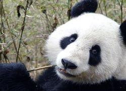 Каждый сотый вид животных находится на грани вымирания