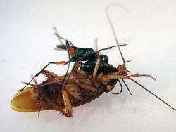 Тараканы-зомби: Вернуть в чувство