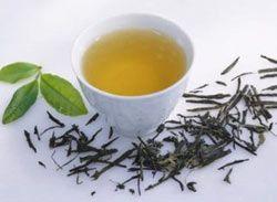 Белый чай оказался целебнее других напитков