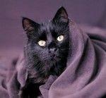 Почему мы боимся черных котов и стучим по дереву?