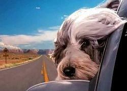 Как обеспечить своей собаке достойный отпуск