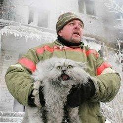 Спасенные горожане требуют награды для кота-героя