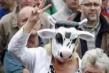 В Европе молочники продолжают протестовать