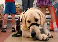 Для собак закон не писан