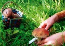 Советы тем, кто собрался за грибами