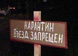 Вспышка африканской чумы в Ростовской области
