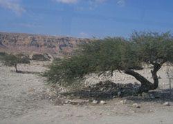 Весь Израиль высохнет, и останется только берег