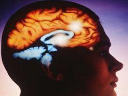 Холестерин нужен для развития мозга