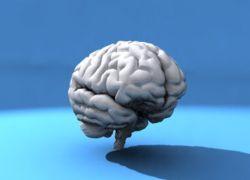 Мозг человека не уменьшается с возрастом
