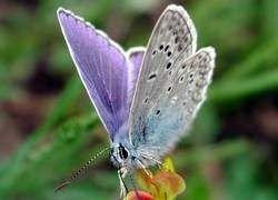 Ученые установили день рождения бабочек